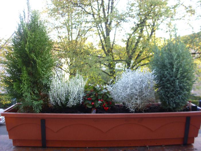 herbst und winterbepflanzung little green planet. Black Bedroom Furniture Sets. Home Design Ideas