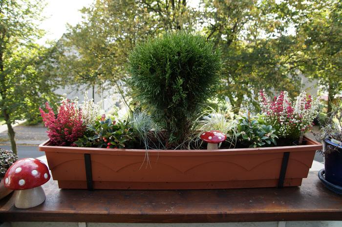 herbstzauber herbstliche balkonk sten 2012 little green planet. Black Bedroom Furniture Sets. Home Design Ideas