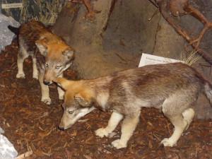 Wolfwurfhöhle