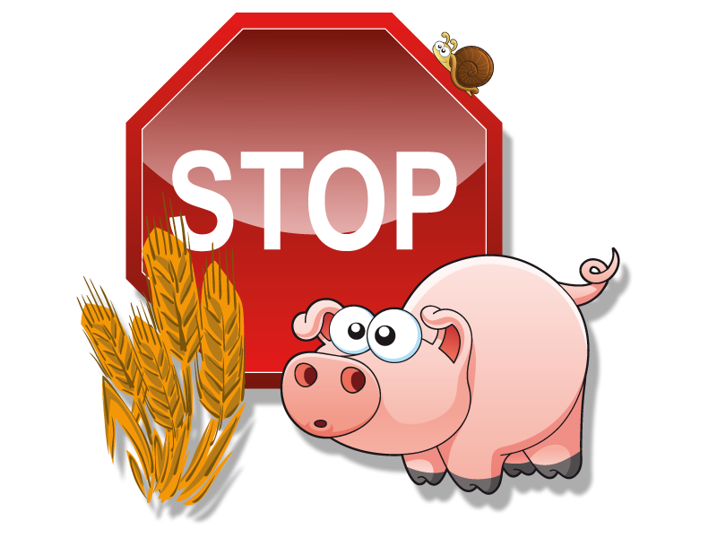 schweinefleisch-und-weizen