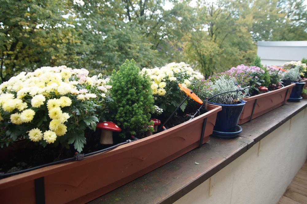 Herbstbepflanzung Balkon : Balkon- & Fensterbankgeflüster Little ...