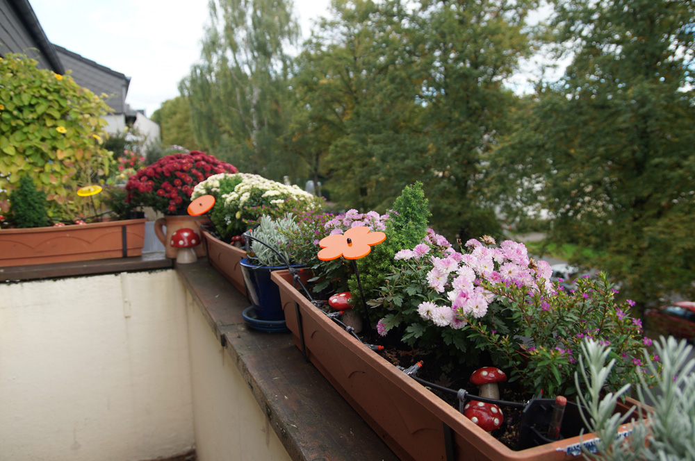 übergangsbepflanzung Herbstbepflanzung 2015 Little Green Planet
